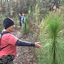 Florida Trail: CRS N section work day 11-13-2016, 2016-11-23