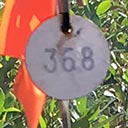 Monitoring plants marked with metal tags in Deer Lake State Park, 2018_02_28